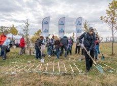 ОББ и ДЗИ засаждат 3290 дървета в 9 български града